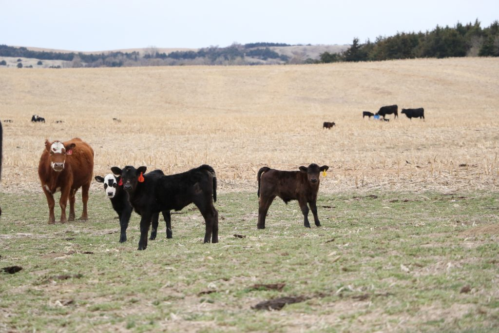 Data show coexistence of maternal traits and carcass value – Wyoming Livestock Roundup